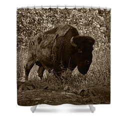 Buffalo Junction Shower Curtain by B Wayne Mullins