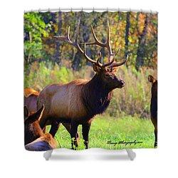 Buffalo River Elk Shower Curtain