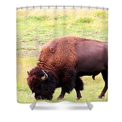 Buffalo Roaming Shower Curtain