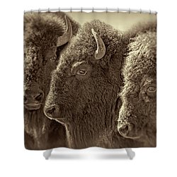Shower Curtain featuring the photograph Trio American Bison Sepia Brown by Jennie Marie Schell