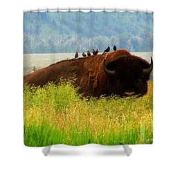 Buffalo Wings Shower Curtain by Janice Westerberg