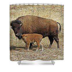 Buffalo With Newborn Calf Shower Curtain
