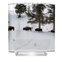 Buffaloes In Yellowstone National Park Shower Curtain