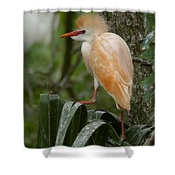 Buffy - The Cattle Egret Shower Curtain