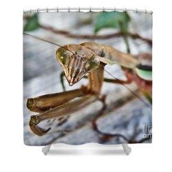 Bug Eyed  Shower Curtain by Christy Ricafrente