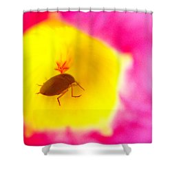Shower Curtain featuring the photograph Bug In Pink And Yellow Flower  by Ben and Raisa Gertsberg