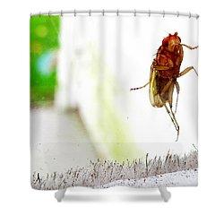 Bug On Window Shower Curtain