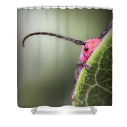 Bug Untitled Shower Curtain