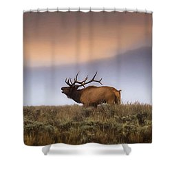 Bugle Boy  Shower Curtain