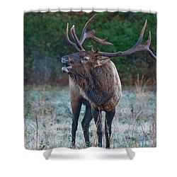 Bugling Elk Shower Curtain