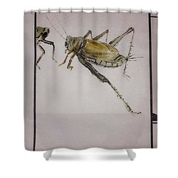 Bugs And Blooms Album Shower Curtain by Debbi Saccomanno Chan
