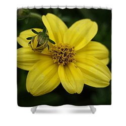 Bugs Life Shower Curtain