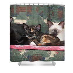 Shower Curtain featuring the photograph Bugzy And His Babies by Karen Slagle