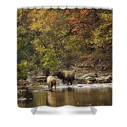 Bull And Cow Elk In Buffalo River Crossing Shower Curtain by Michael Dougherty