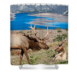 Bull Elk Above Tomales Bay Shower Curtain