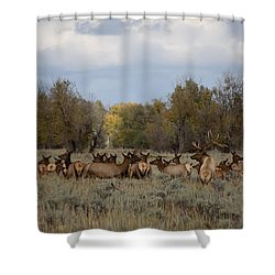 Bull Elk And Harem Shower Curtain