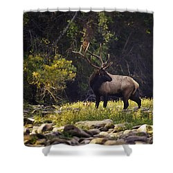 Bull Elk Checking For Competition Shower Curtain by Michael Dougherty
