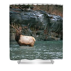 Shower Curtain featuring the photograph Bull Elk Crossing The Buffalo River by Michael Dougherty
