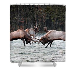 Shower Curtain featuring the photograph Bull Elk Fighting In Boxley Valley by Michael Dougherty