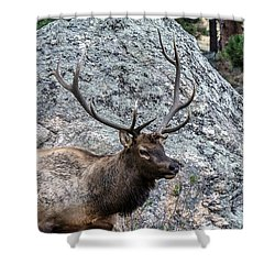 Bull Elk Granite Moss Rock Shower Curtain