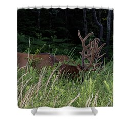 Bull Elk Grazing Shower Curtain