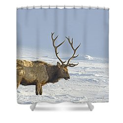 Bull Elk In Snow Shower Curtain