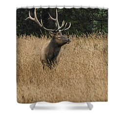 Bull Elk In Yellowstone Shower Curtain