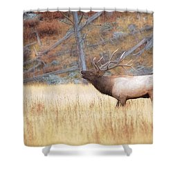 Shower Curtain featuring the photograph Bull Elk by Kelly Marquardt