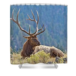 Bull Elk Resting Shower Curtain