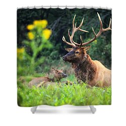 Shower Curtain featuring the photograph Bull Elk Rutting In Boxley Valley by Michael Dougherty