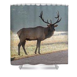Bull Elk Watching Shower Curtain
