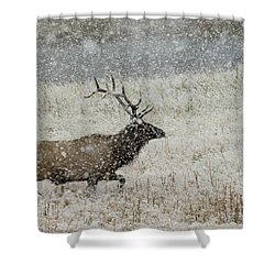 Bull Elk With Snow Shower Curtain