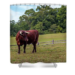 Bull In Field Shower Curtain