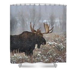 Shower Curtain featuring the photograph Bull Moose In The Fog by Adam Jewell
