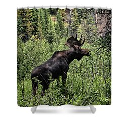 Bull Moose Shower Curtain