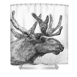 Bull Moose Study Shower Curtain