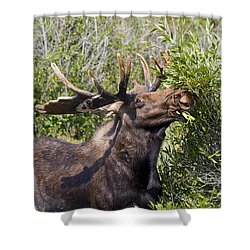 Bull Moose Shower Curtain by Teresa Zieba