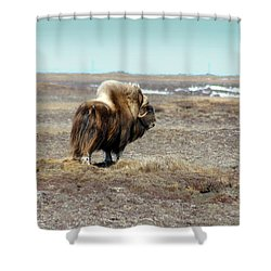 Bull Musk Ox Shower Curtain by Anthony Jones