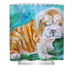 Shower Curtain featuring the painting Bulldog Cub  - Watercolor Portrait by Fabrizio Cassetta