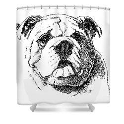 Bulldog-portrait-drawing Shower Curtain