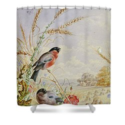 Bullfinches In A Harvest Field Shower Curtain by Harry Bright