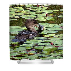 Bullfrog For Breakfast Shower Curtain