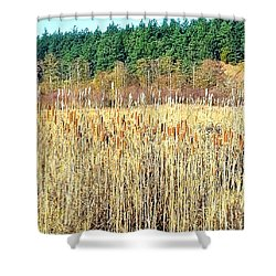 Bullrushes In Late November Shower Curtain by Tobeimean Peter