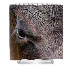 Bull's Eye Shower Curtain