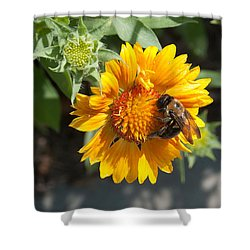 Bumble Bee Collecting Pollen On Sunflower Shower Curtain