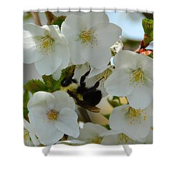 Bumble Bee In Hiding Shower Curtain