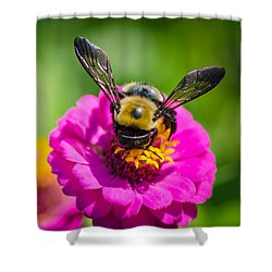 Bumble Bee Macro Image Shower Curtain by Bruce Pritchett