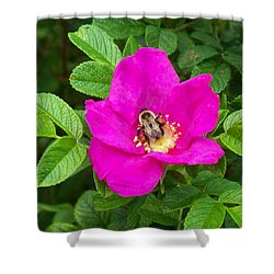 Bumble Bee On A Wild Rose Shower Curtain by Joy Nichols