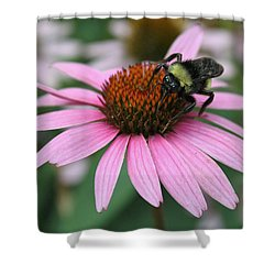 Bumble Bee On Pink Cone Flower Shower Curtain by Sheila Brown
