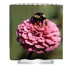 Bumble Bee On Zinnia 2649 Shower Curtain